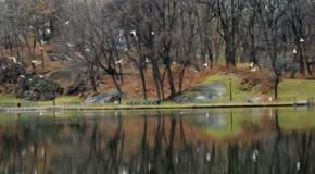 Central Park , fotografias del aniversario.