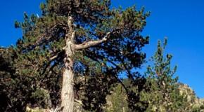 Notas sobre silvicultura