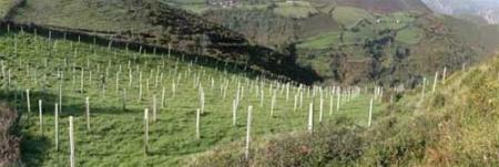 plantación belmonte FAPAS