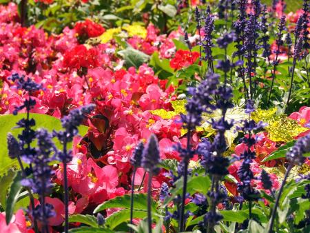 floración, por Trevijano Dalebrook