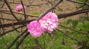 Aromas florales, introducción