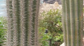 Cactus, una especie singular.