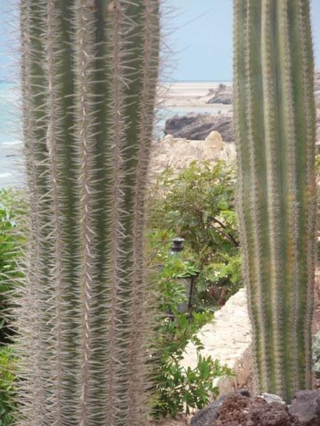 cactus en formentera