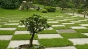 Fundamentos sobre el diseño de un jardín