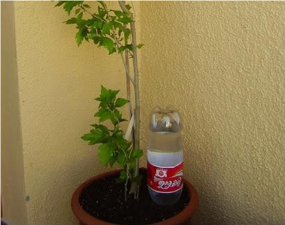 Autoregando plantas en vacaciones
