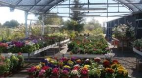 Como escoger las plantas en el vivero