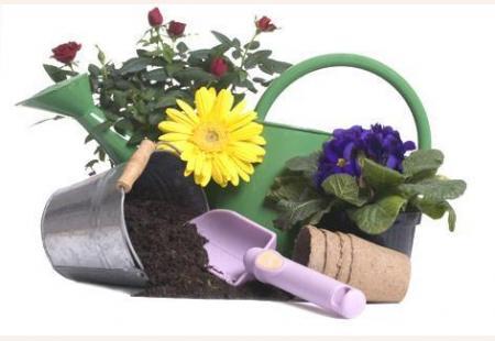 Abona tus plantas