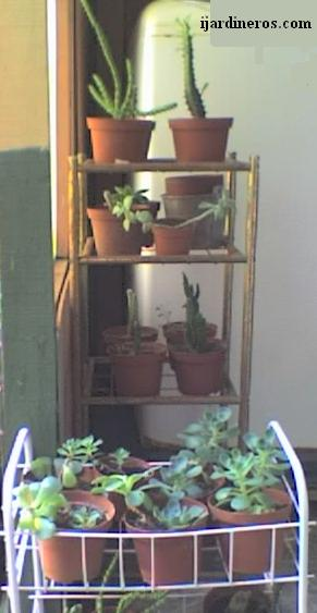 Cactario de mi casa