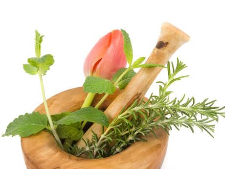 Plantas aromaticas y que perfuman, además de beneficios medicinales.