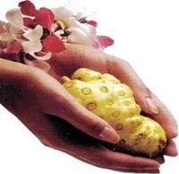 Fruto del noni
