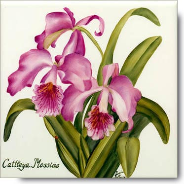cattleya-mossiae