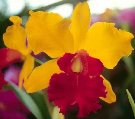 La edad de las orquídeas