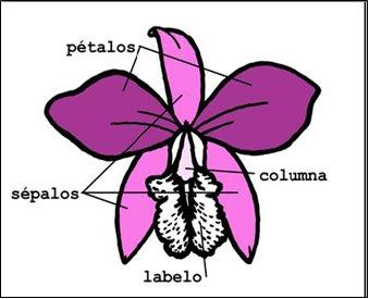 Como distinguir que una planta es una orquídea