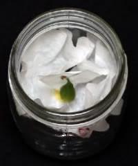 El filtro se pliega dentro del frasco para impedir que el viento esparza las semillas y para un mejor secado.