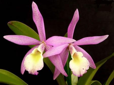 Testimonio de una cultivadora de orquídeas