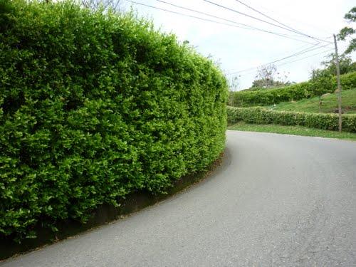 Decoración del jardín para evitar miradas indiscretas