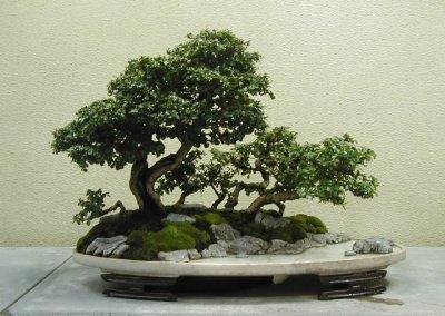Consejos para cultivar bonsáis