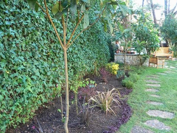 Consejos novedosos para mantener el jardín en invierno